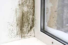 Are You Having Damp Problems In Your Property News